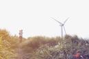 子供を抱っこしている母親と風力発電の風車
