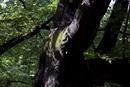 木の幹に生えた苔