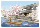 倉敷川から眺める桜と伝統的な建物