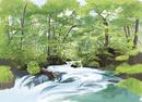 奥入瀬渓流阿修羅の流れから新緑を望む