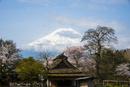 忍野八海 桜と富士山