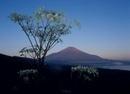 山中湖村 パノラマ台 シシウドと富士山