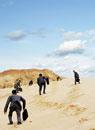 砂浜を登っていくスーツ姿の男性たち