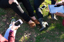 Group of female friends relaxing in park, using digital tablet and smartphone, low section