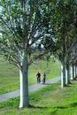 Couple cycling on tree lined cycle path around Lake Balaton, Budapest,Hungary