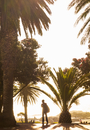 Silhouette of person by palm trees on camps bay beach, Cape Town, South Africa