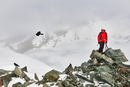 Man on top of snow covered mountain looking at bird in flight, Saas Fee, Switzerland