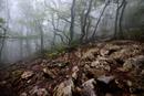 Misty forest and rocks, Crimea, Ukraine