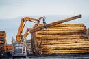 Heavy machinery, moving cut logs