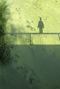 Shadow of person and railing on swamp