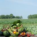 畑の前に並ぶ野菜の集合