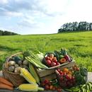草原に並ぶたくさんの野菜