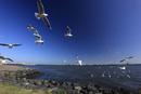 琵琶湖の上を飛ぶ鳥と琵琶湖大橋 滋賀県