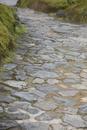 日本庭園の石畳