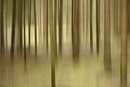 Abstract scene of a Norway spruce (Picea abies) forest in the summer, Upper Palatinate, Bavaria, Germany