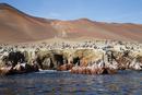 Pelican Colony at Wildlife Sanctuary on Ballestas Islands, Paracas, Pisco Province, Peru
