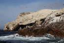 Penguins at Wildlife Sactuary on Ballestas Islands, Paracas, Pisco Province, Peru
