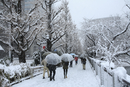 樹木の雪景色