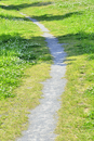 シロツメクサの咲く野原