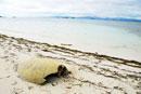 砂浜のカメの死骸