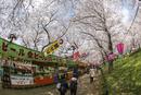 権現堂、埼玉県、幸手市、桜並木