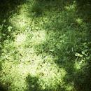 緑の草にあたる日差し