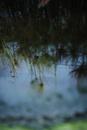 水面に映る草