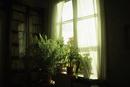 J.L.ルーネベリの家の窓辺 フィンランド