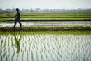 水田のあぜ道を歩く農夫