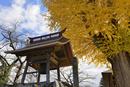 楢下宿の浄休寺鐘楼と大イチョウ 山形県