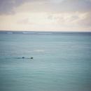 海を泳ぐイヌと男性