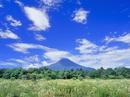 花の都公園に咲くヒメジョオンと富士山