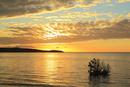 沖縄西表島 前良川のマングローブと朝焼けに染まる海