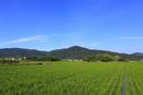 山の辺の道 夏の三輪山