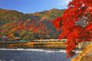 嵐山・渡月橋と紅葉
