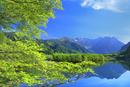 新緑の上高地,大正池より穂高連峰
