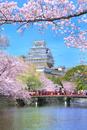 サクラ咲く姫路城
