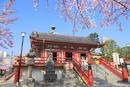 上野不忍池のサクラと弁天堂