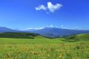 霧ケ峰高原に咲くニッコウキスゲの花の群落と富士山に南アルプス
