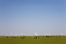 Wind turbines on pasture