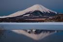 A pair of mute swans in Lake Kawaguchi and Mount Fuji