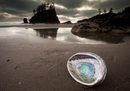 An abalone shell on Second beach