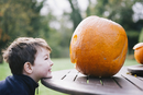 A small boy looking at a large pumpkin on a garden table.