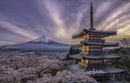 View of Japanese building and Sakura cherry trees with snowcapped Mt Fiji in background