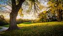 Sunset over golf course, Melbourne, Australia