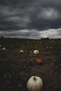 Dark clouds over pumpkin field, Omaha, Nebraska, USA