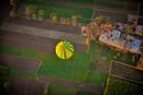 Balloon Fields