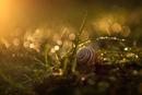 Awakening of the Nature