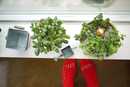 Potted plants on window sill, Massachusetts, USA