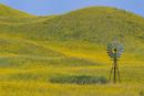 Windmill in wild sunflower covered hills, Valentine, Nebraska, USA